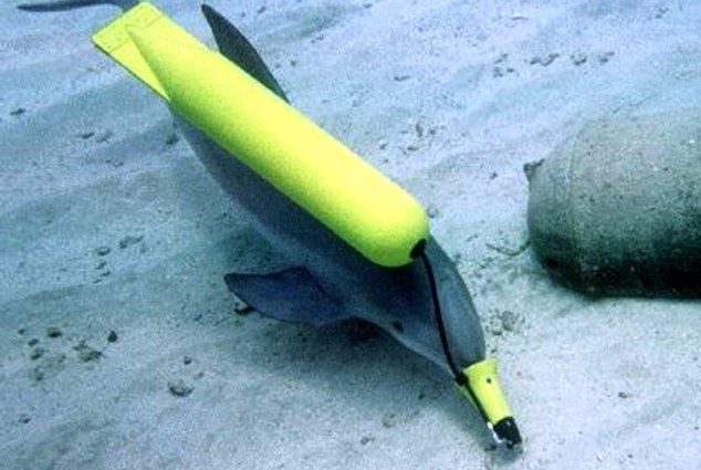 Defecting: The Ukrainian army's dolphins, trained to hunt for mines, plant bombs and attack enemy divers, will be transferred to the Russian Navy