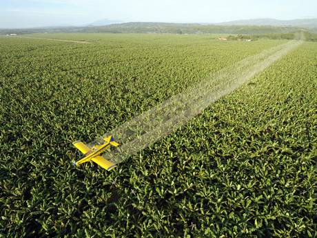 A aircraft sprays fungicide over a plantation (Getty Images)
